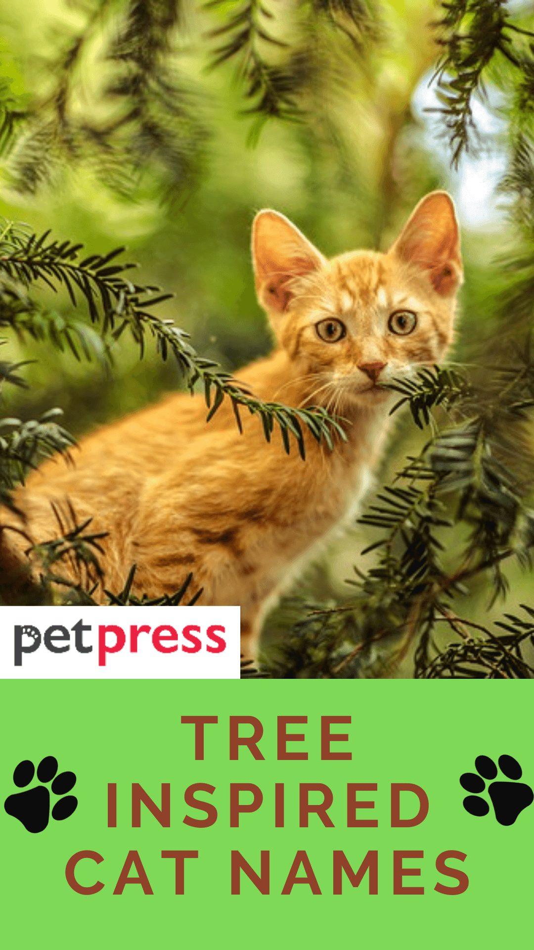 tree-cat-names