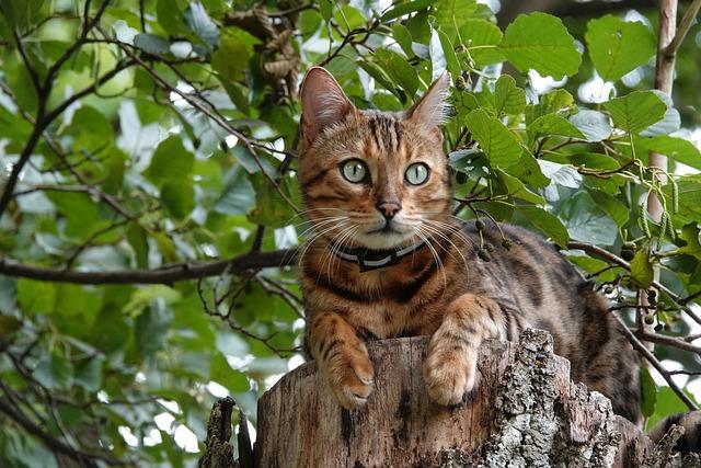 male-tree-cat-names