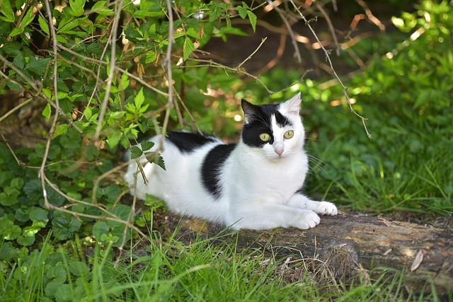 female-tree-cat-names