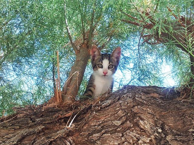 unisex-tree-cat-names