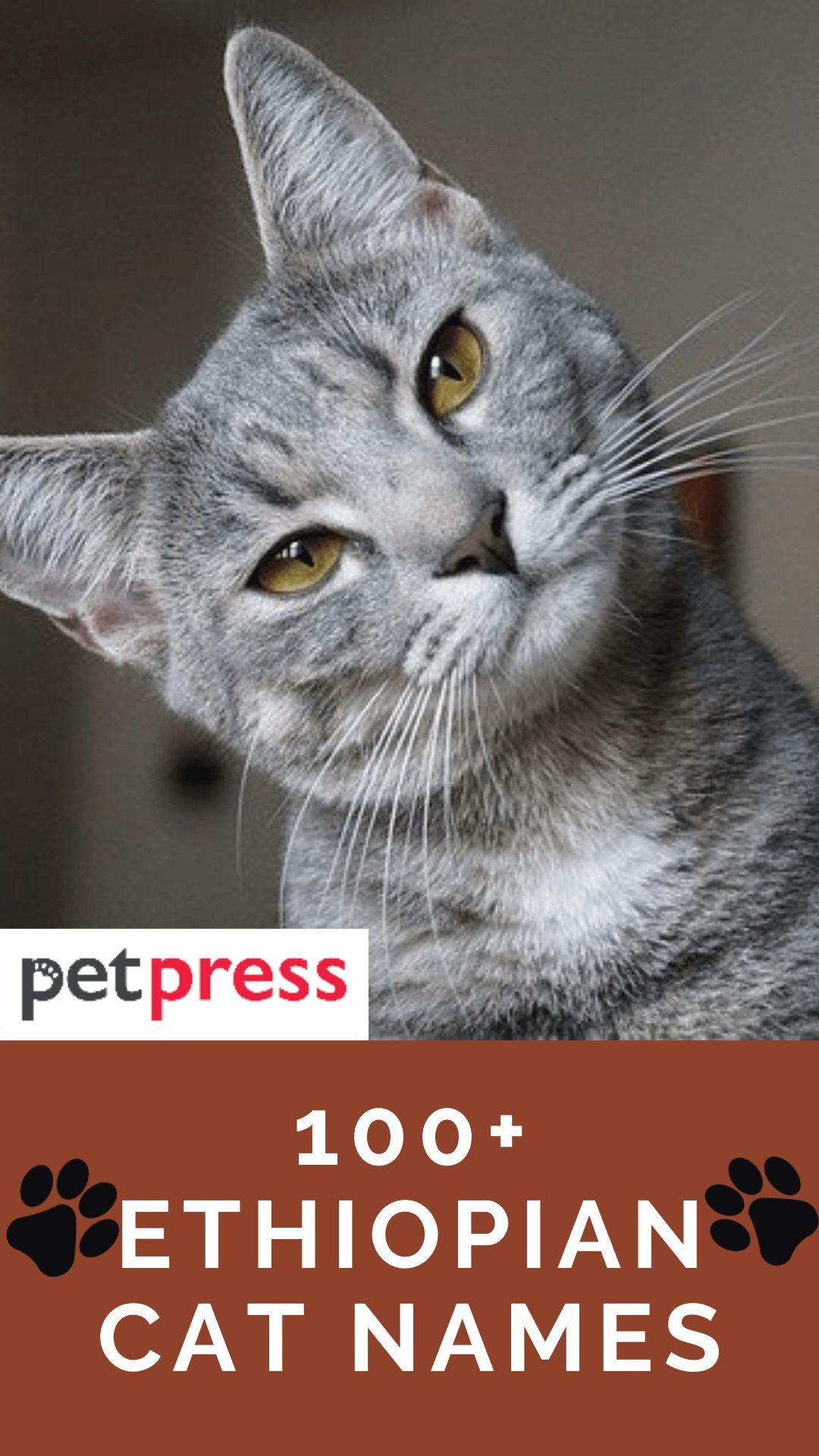 ethiopian-cat-names