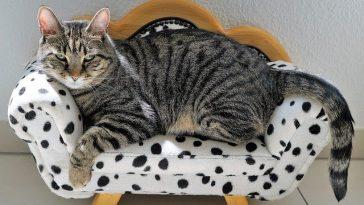 male-ethiopian-cat-names