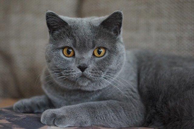 female-ethiopian-cat-names