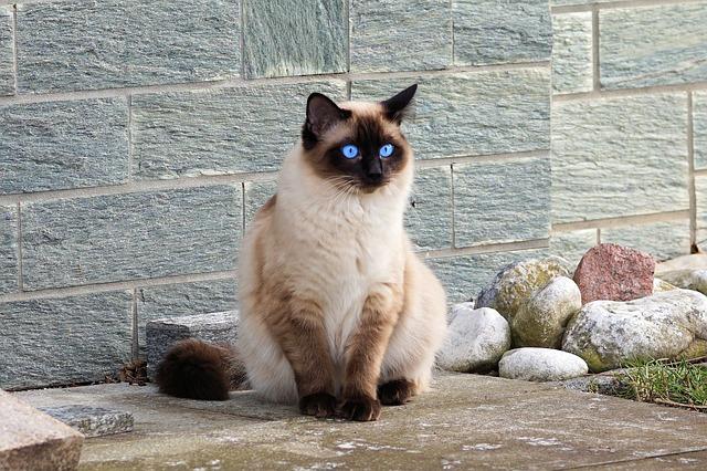 unisex-ethiopian-cat-names