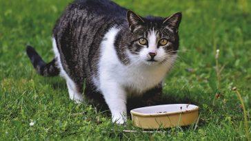 male-tibetan-cat-names
