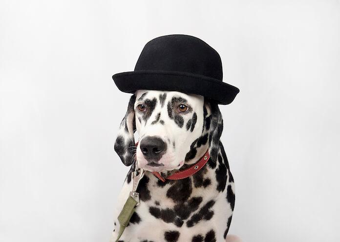 jewish and yiddish dog names