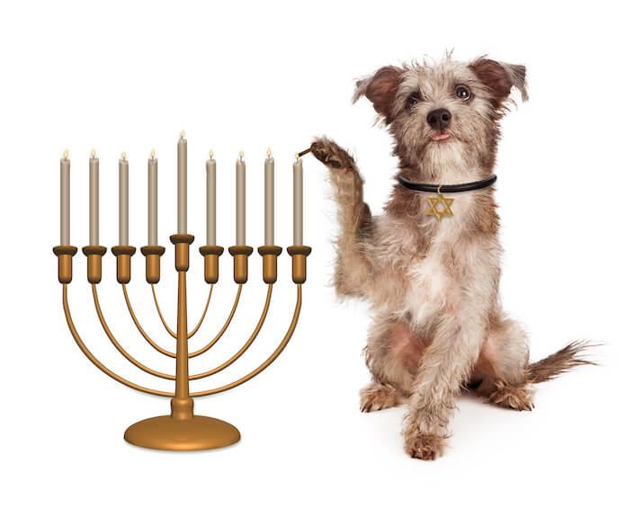 female yiddish dog names