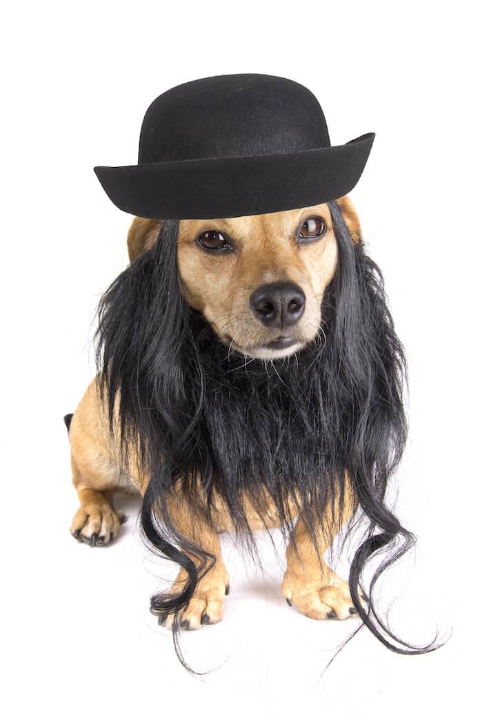 male yiddish dog names