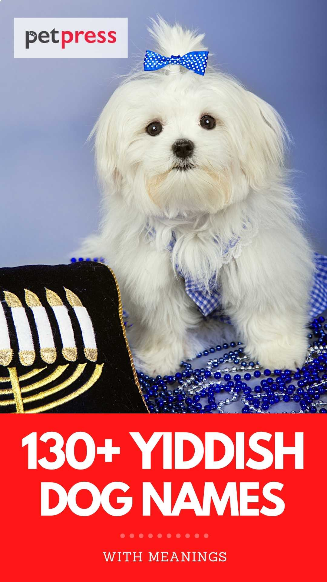 yiddish dog names with meanings for naming a pup