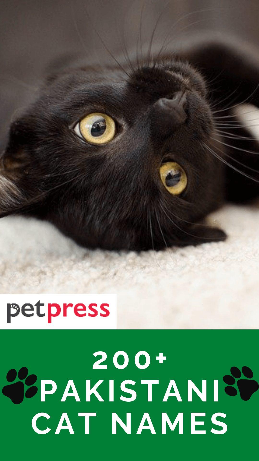 pakistani-cat-names