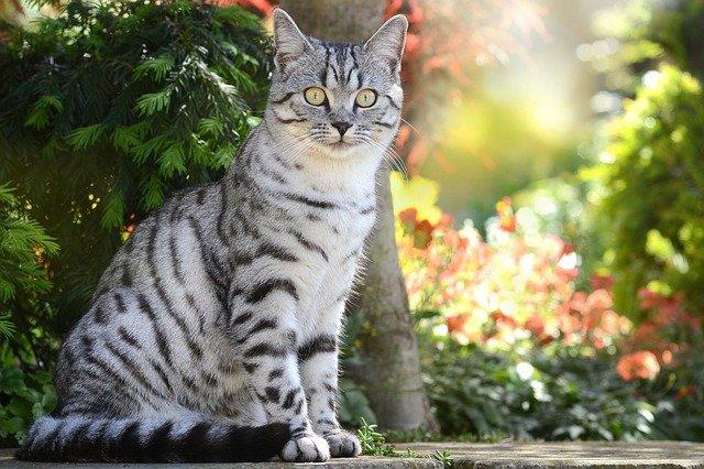 male-pakistani-cat-names
