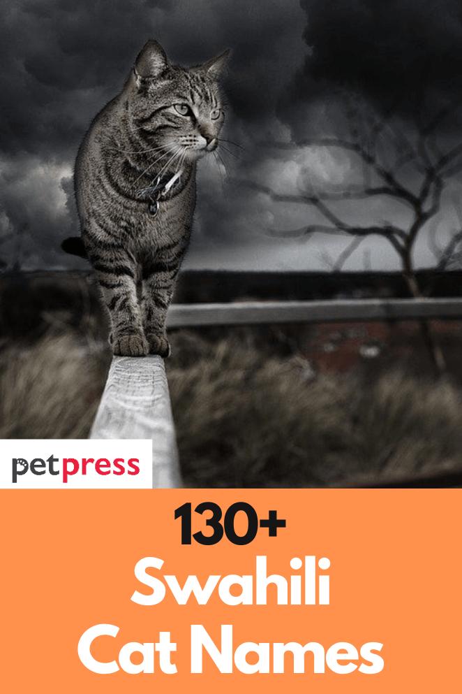 swahili-cat-names