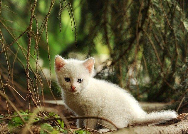 swahili-female-cat-names