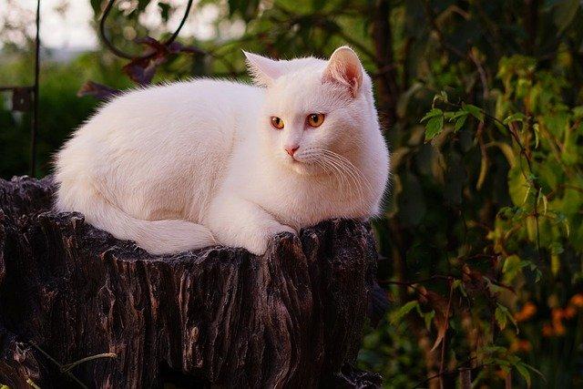 swahili-unisex-cat-names