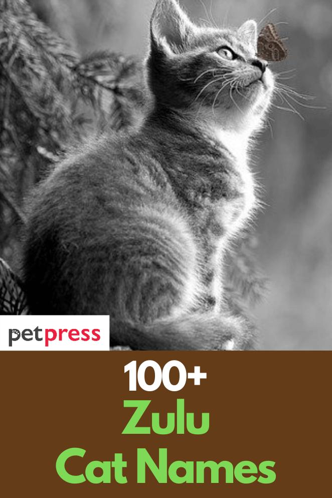 zulu-cat-names