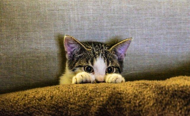 zulu-female-cat-names