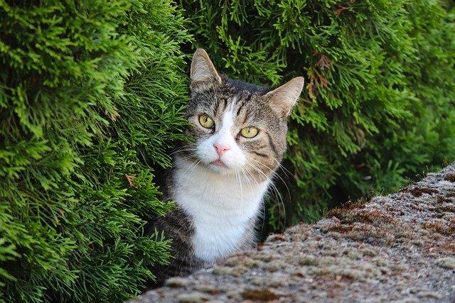 zulu-male-cat-names