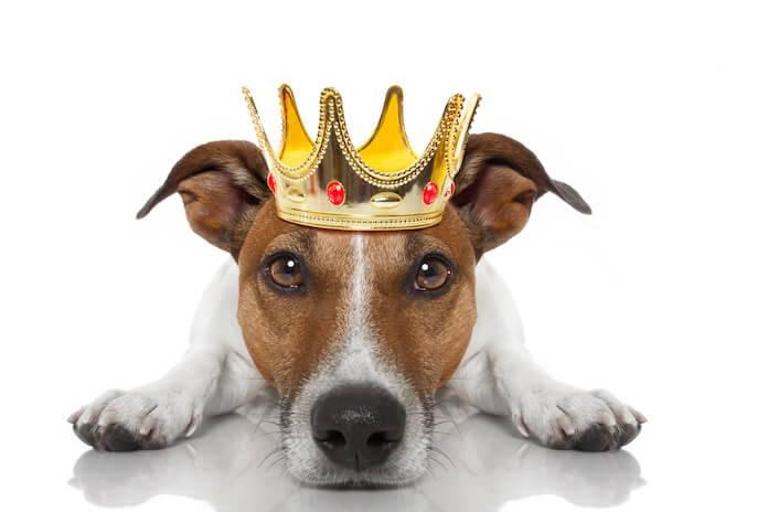 male Hebrew dog names