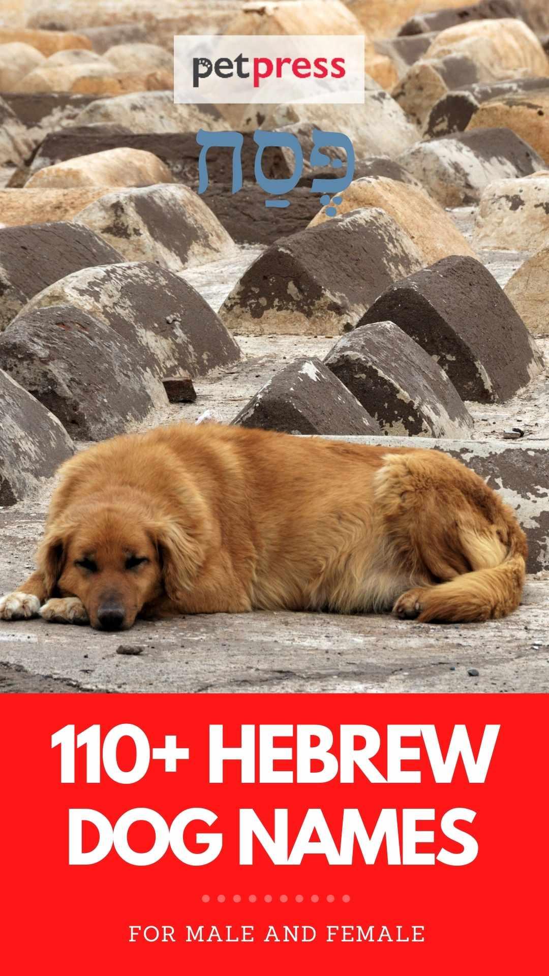 dog names in Hebrew