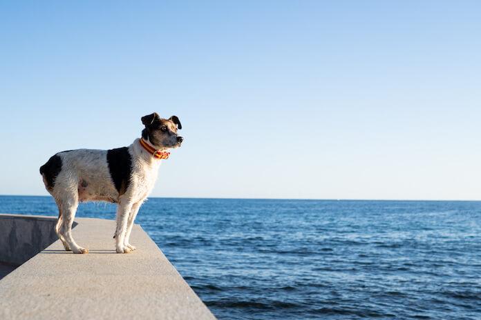 female Hebrew dog names