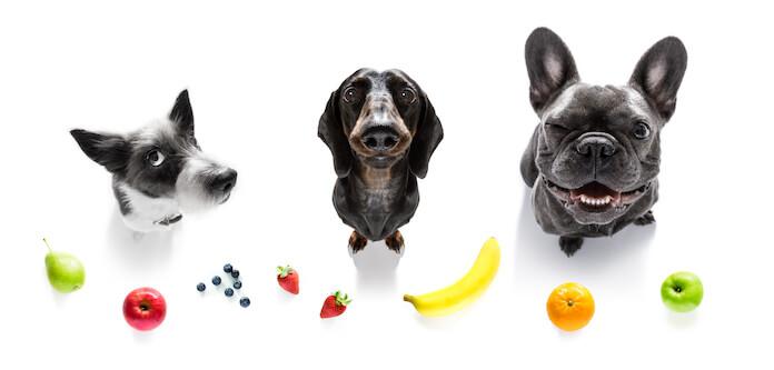 vegan or fruit names for a dog