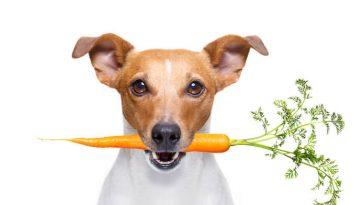 vegan inspired dog names