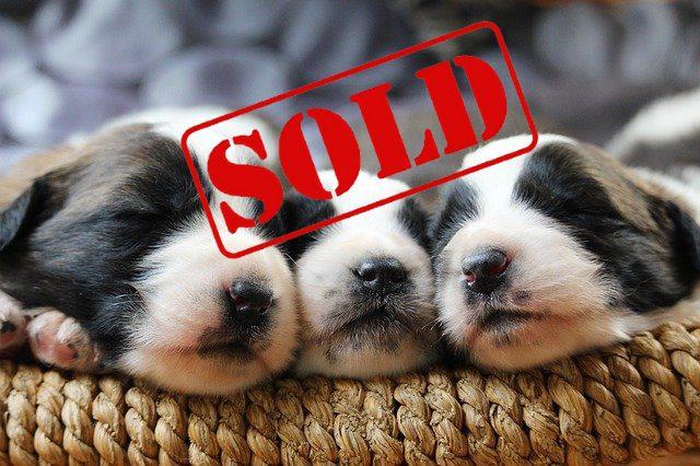 dog-sold