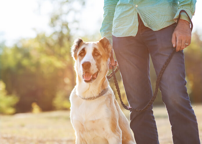 What is the next step once the dog is at home?