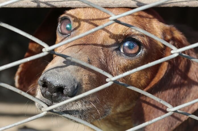 Many puppy mills do not practice humane euthanasia