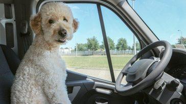 puppy-travel