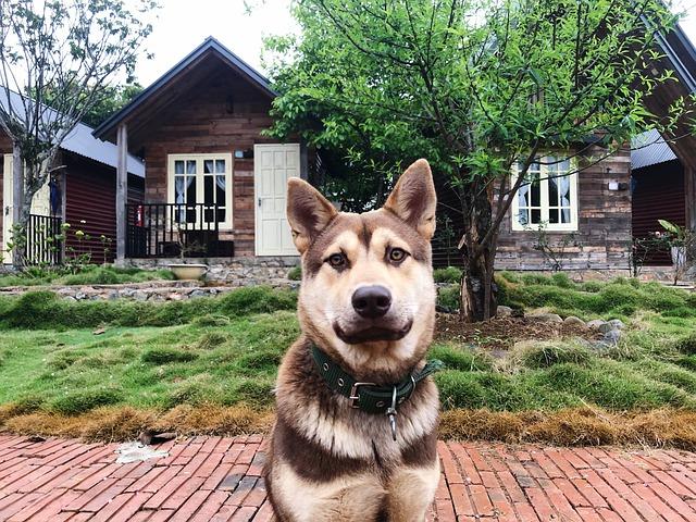 puppy-home