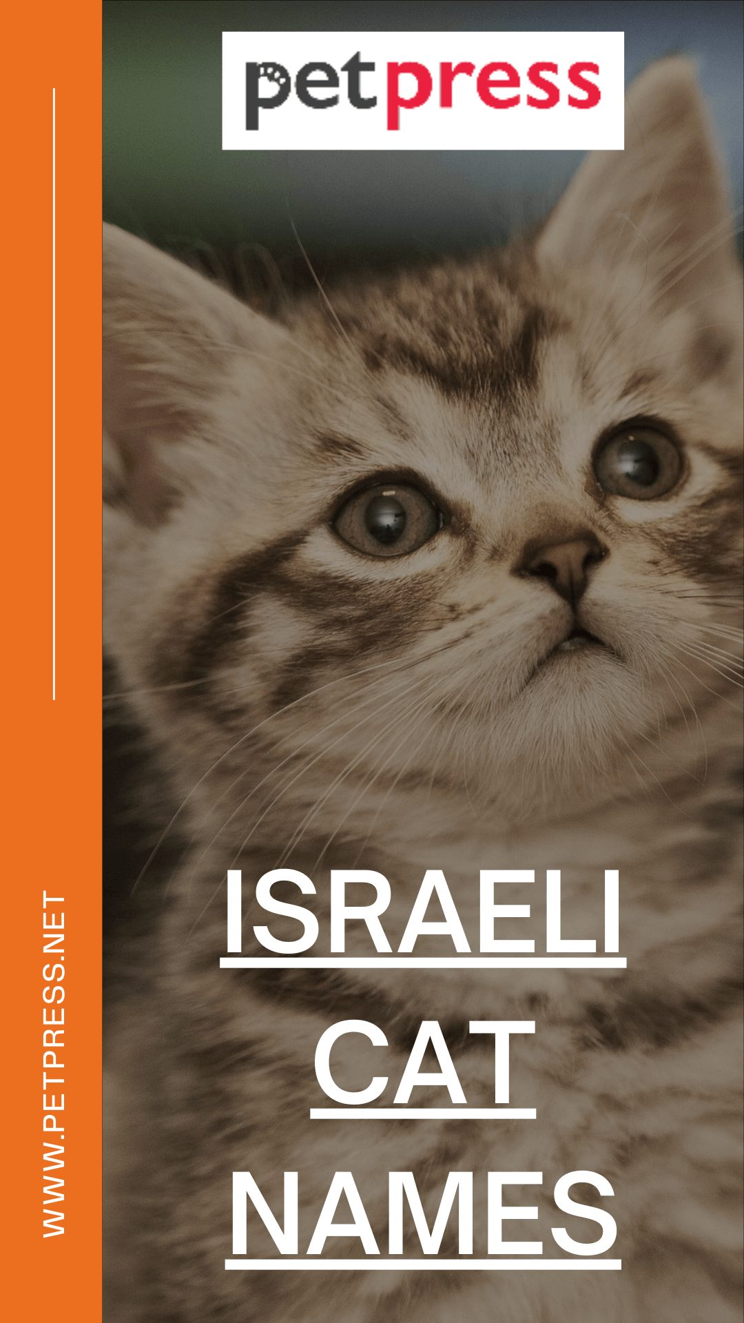 israeli-cat-names