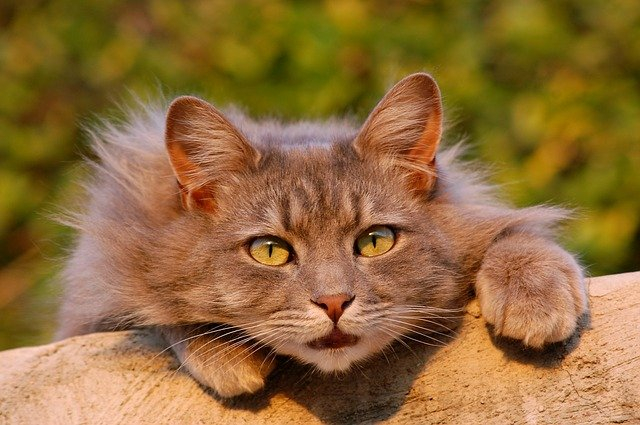 male-israeli-cat-names