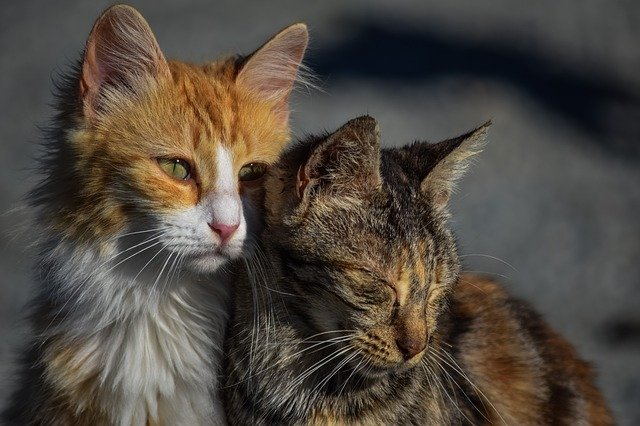 male-hebrew-cat-names