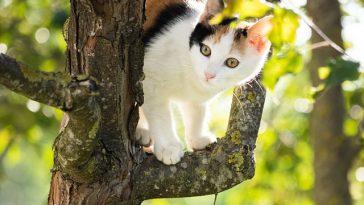 female-israeli-cat