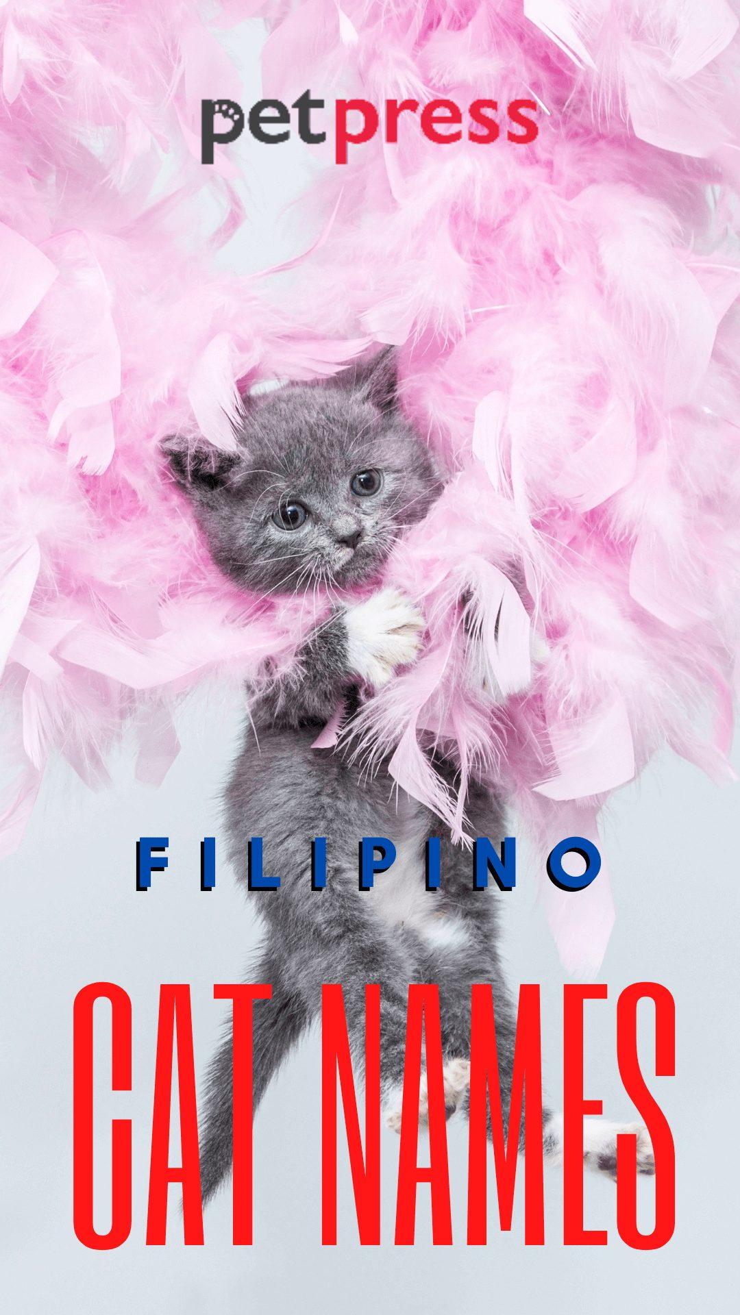 filipino-cat-names