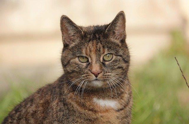 male-filipino-cat-names