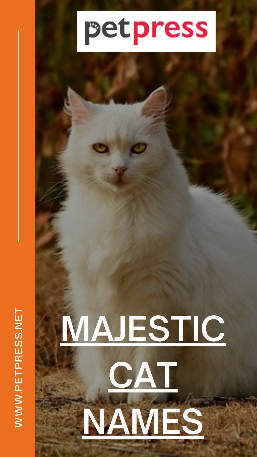 majestic-cat-names