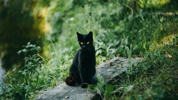 male-majestic-cat-names