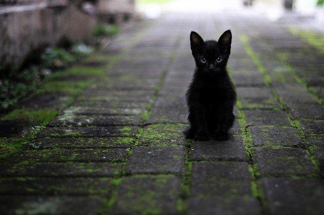 female-majestic-cat-names