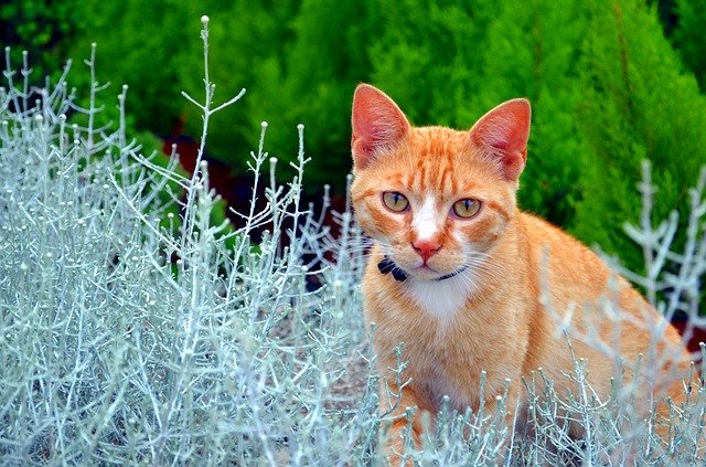 female-herb-cat-names
