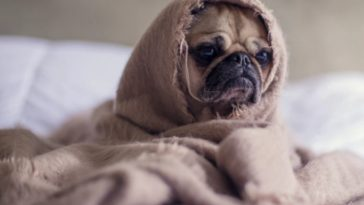 9 Signs your Dog Might be Sick