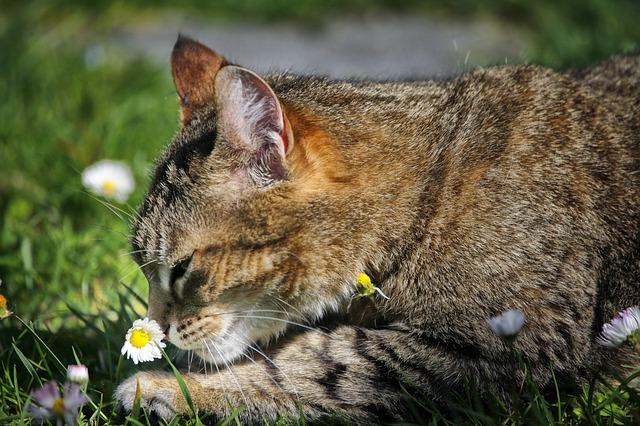 male-vegan-cat