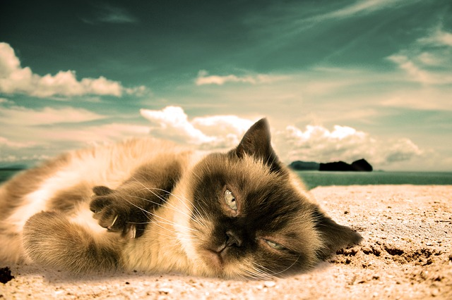 male-beach-cat-names