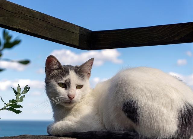 female-beach-cat-names