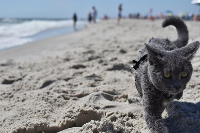 unisex-beach-cat-names