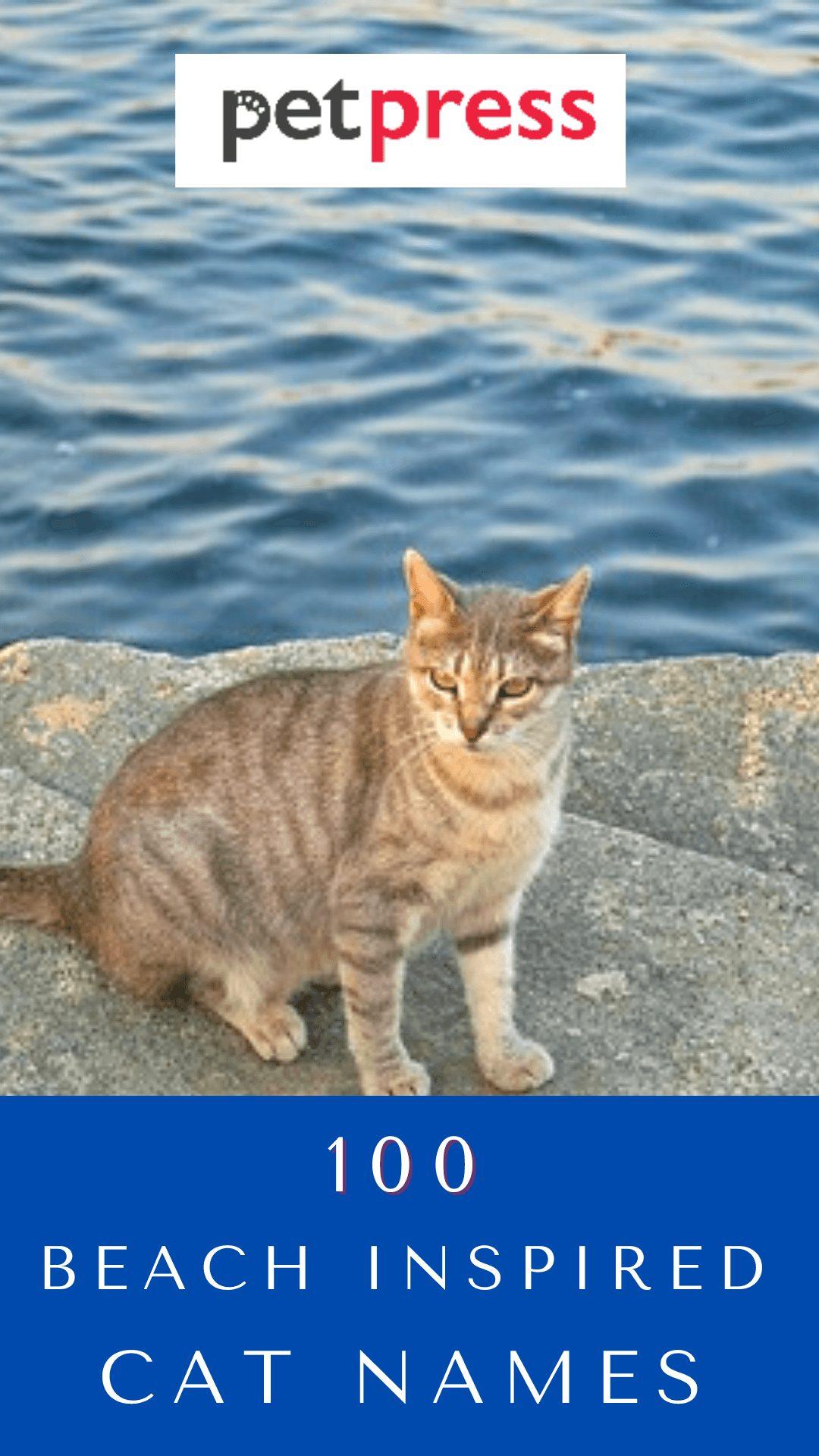 beach-cat-names