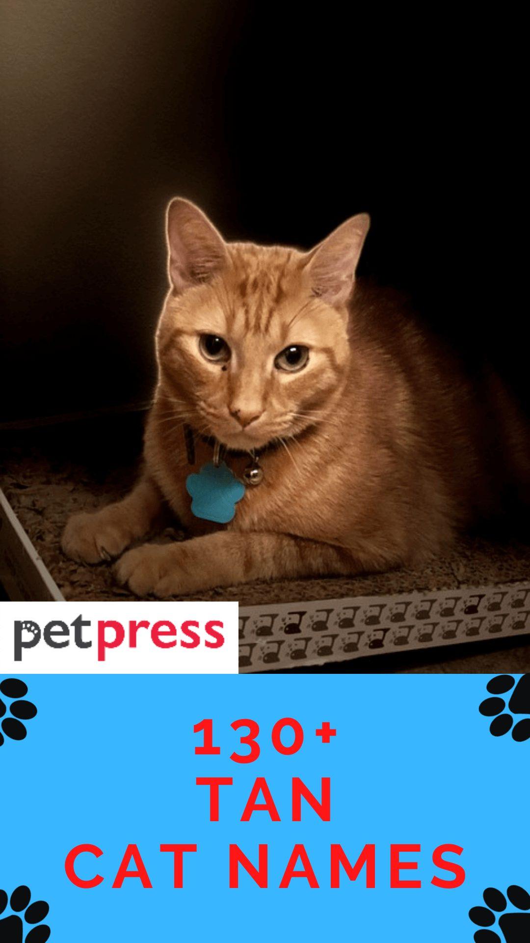 tan-cat-names
