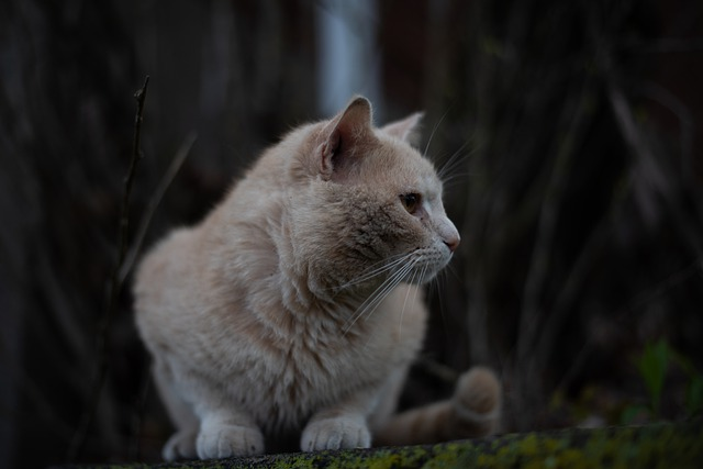 male-tan-cat-names