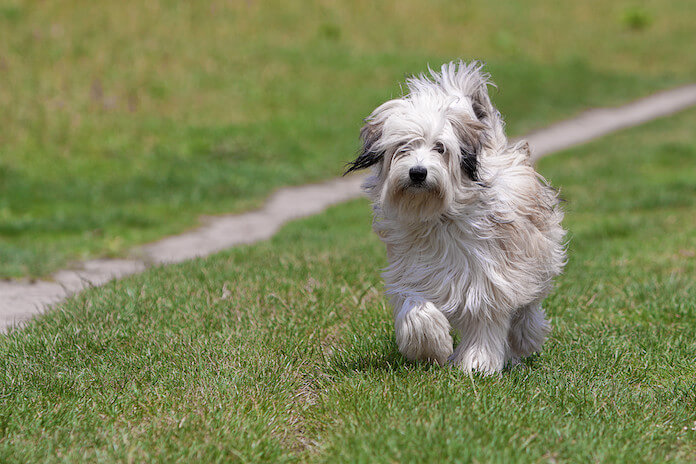 Funny Names For A Dog Without A Tail